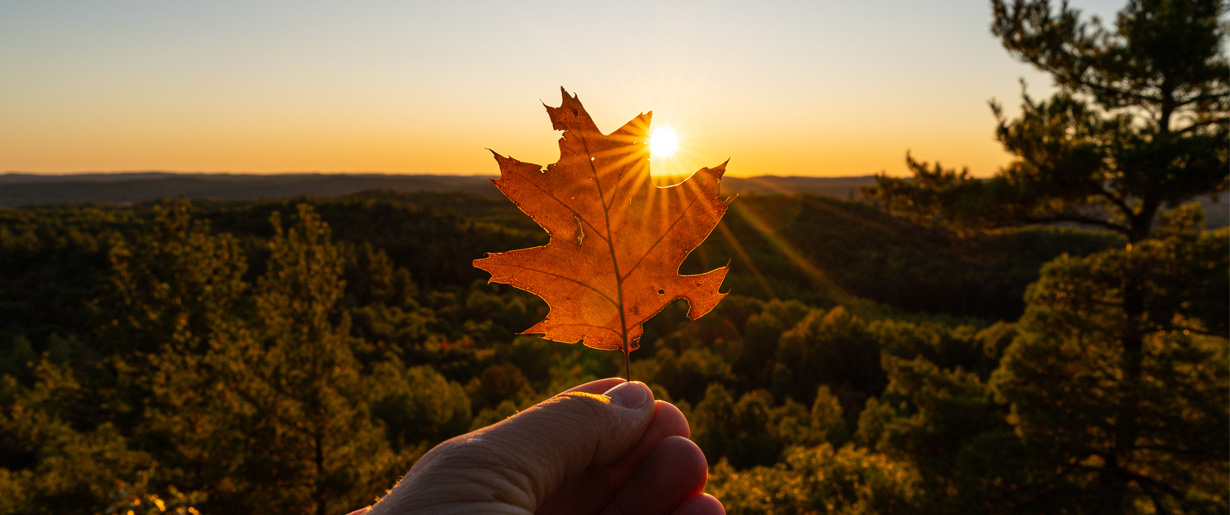 A hand holding up a leaf over a sunset